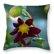 Dripping Garden 2 Throw Pillow