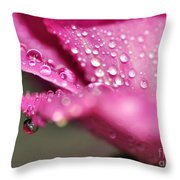 Droplet On Rose Petal Throw Pillow