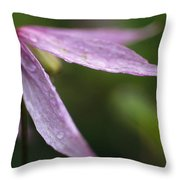 Droplets Of Dew On A Pink Wildflower Throw Pillow