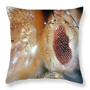 Drosophila Mutant With Bar Eyes Throw Pillow