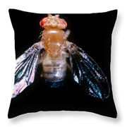 Drosophila With Dichaete Wings Throw Pillow