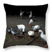 Duck Duck Goose Throw Pillow