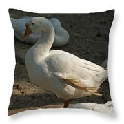 Duck Enjoying The Sun In The Winter In Delhi Zoo Throw Pillow