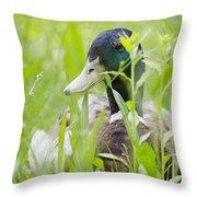 Duck In The Green Grass Throw Pillow