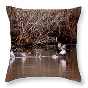 Duck - Ring-necked - Runway Throw Pillow