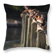 Ducks Ducks Ducks Throw Pillow