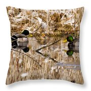 Ducks Reflect On The Days Events Throw Pillow
