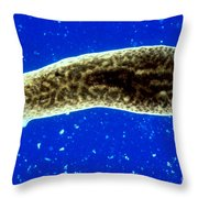 Dugesia, A Flatworm Throw Pillow