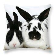 Dutch Rabbits Throw Pillow