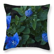 Dwarf Balloon Flower Platycodon Astra Blue 2 Throw Pillow