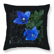 Dwarf Balloon Flower Platycodon Astra Blue  Throw Pillow
