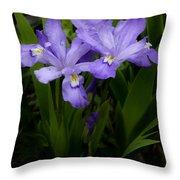Dwarf Crested Iris Throw Pillow