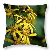 Dwarf Golden Ray Throw Pillow