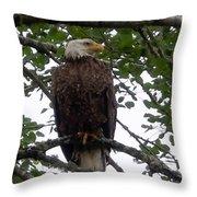 Eagle At Hog Bay Maine Throw Pillow