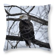 Eagle In The Wild Throw Pillow