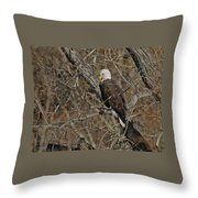 Eagle In Tree 3 Throw Pillow