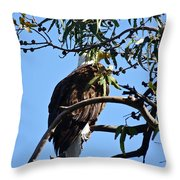 Eagle Under Cover Throw Pillow