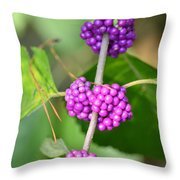 Early Amethyst Throw Pillow