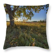 Early Evening Under An Old Poplar Tree Throw Pillow
