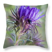 Early Knapweed Throw Pillow