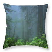Early Morning In The Forest, Humboldt Throw Pillow