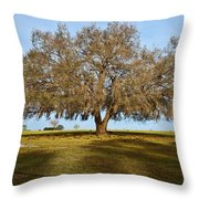 Early Morning Oak Throw Pillow