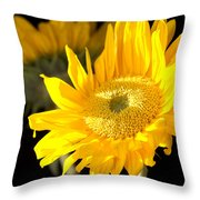 Early Morning Sunrays Throw Pillow