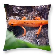 Easterm Newt Nnotophthalmus Viridescens 10 Throw Pillow