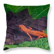 Easterm Newt Nnotophthalmus Viridescens 12 Throw Pillow