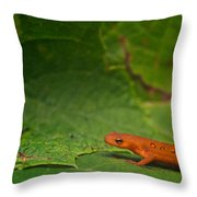 Easterm Newt Nnotophthalmus Viridescens 13 Throw Pillow