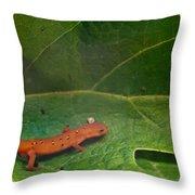 Easterm Newt Nnotophthalmus Viridescens 14 Throw Pillow