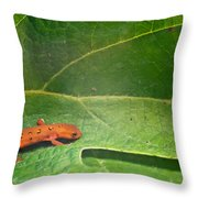 Easterm Newt Nnotophthalmus Viridescens 15 Throw Pillow