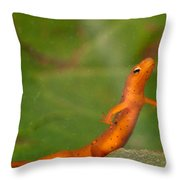 Easterm Newt Nnotophthalmus Viridescens 20 Throw Pillow
