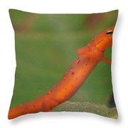 Easterm Newt Nnotophthalmus Viridescens 21 Throw Pillow