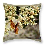 Eastern Amberwing On Wild Buckwheat Throw Pillow
