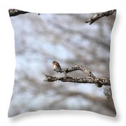 Eastern Bluebird - Old And Alive Throw Pillow