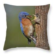 Eastern Bluebird Feeding Chick Throw Pillow