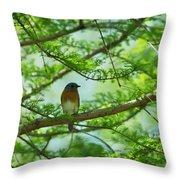 Eastern Bluebird In Bald Cypress Tree Throw Pillow