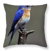 Eastern Bluebird Throw Pillow