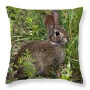 Eastern Cottontail Rabbit Dmam005 Throw Pillow