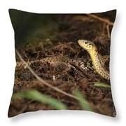 Eastern Garter Snake - Checkered Coloration Throw Pillow
