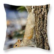 Eastern Gray Squirrel Sciurus Throw Pillow