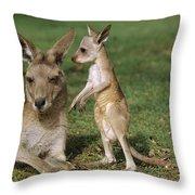 Eastern Grey Kangaroo And Joey Throw Pillow