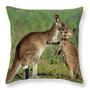 Eastern Grey Kangaroo Macropus Throw Pillow