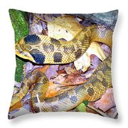 Eastern Hognose Snake Throw Pillow by Kathy  White