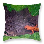 Eastern Newt Notophthalmus Viridescens 26 Throw Pillow