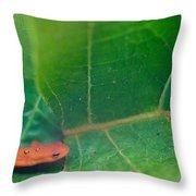 Eastern Newt Notophthalmus Viridescens 28 Throw Pillow