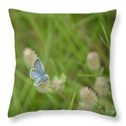Eastern Tailed Blue Butterfly Throw Pillow