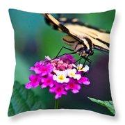 Eastern Tiger Swallowtail 8 Throw Pillow