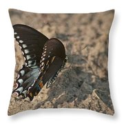 Eastern Tiger Swallowtail 8526 3205 Throw Pillow
